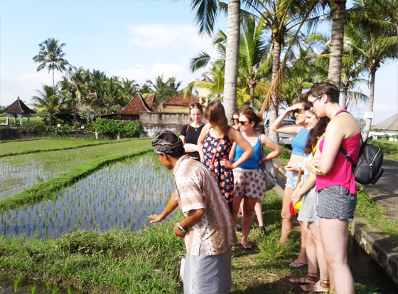 exploring-rice-paddy