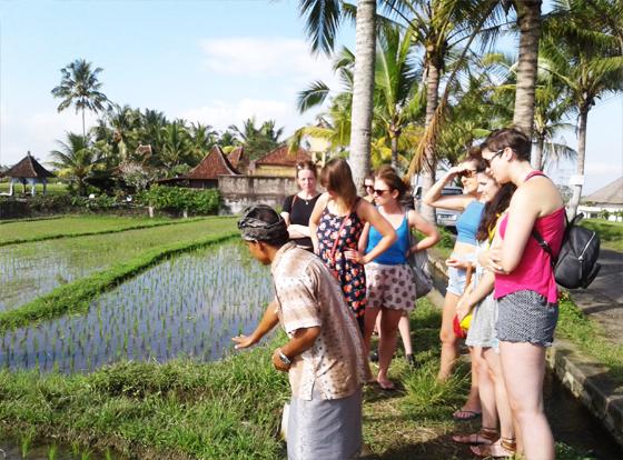 exploring-rice-paddy
